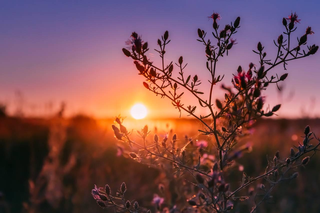 did God create light twice - Autumn Wild Flowers In Sunset Sunrise Sunlight.
