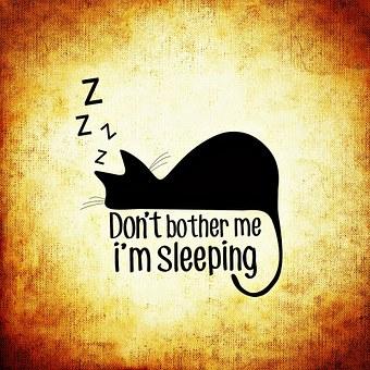 sabbath-sleeping-cat