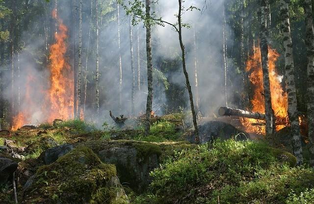burn trees